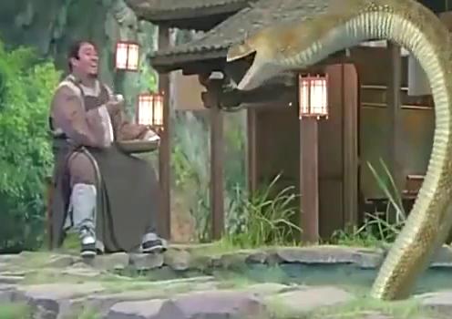 男子水池中养巨蟒,喂养时如此调皮,就不怕你的宠物造反吗?