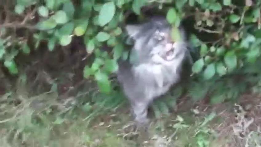 偶遇一只话痨猫咪,和人一问一答,聊的起劲,还真像那么回事