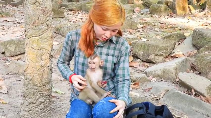 可怜的小阿克塞尔猴子