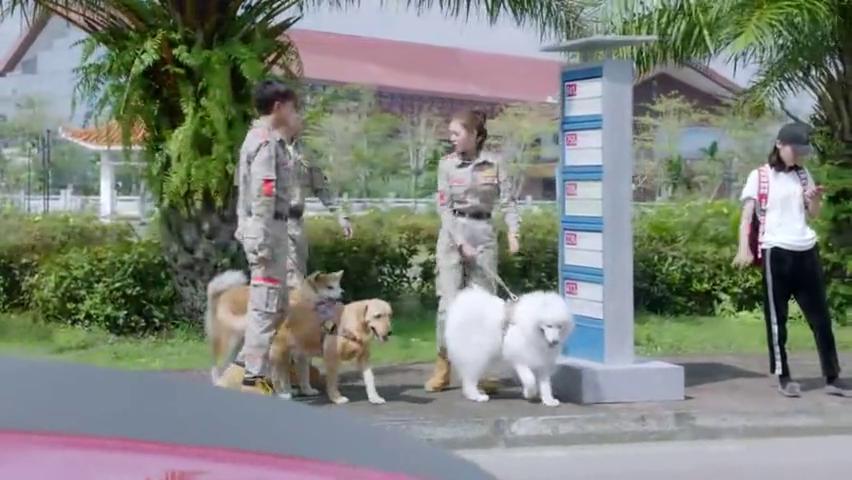 神犬小七3:女老板的儿子遭绑架,现在反倒来求助完美世界救援队