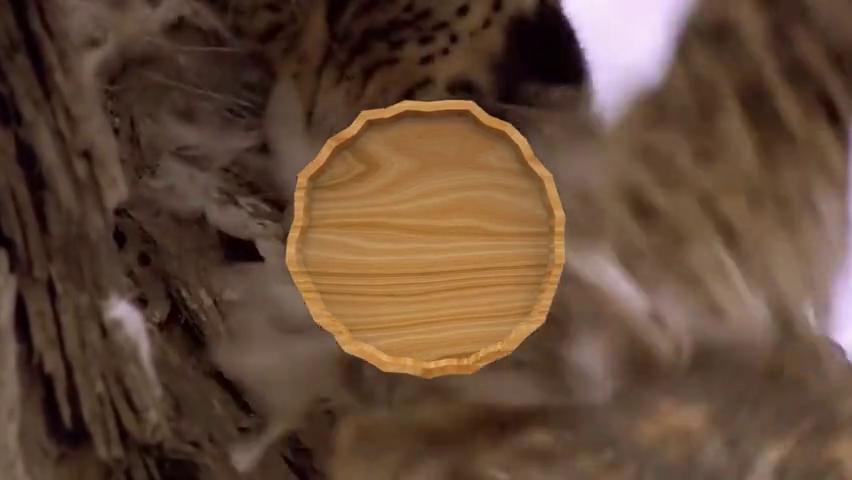 猫头鹰在树洞休息,没料到花豹会上树直接掏洞,下一秒凉凉了!