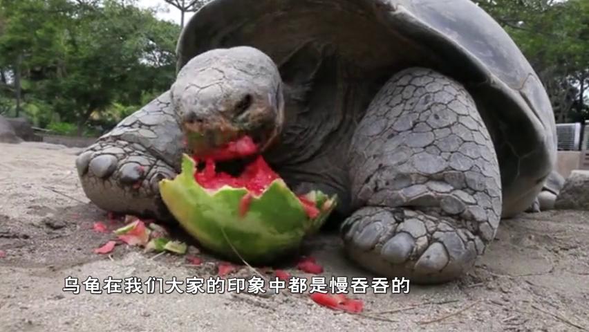 """男童捡到一只""""龙龟"""",养14年不舍得吃,父亲看后脸色大变报警"""