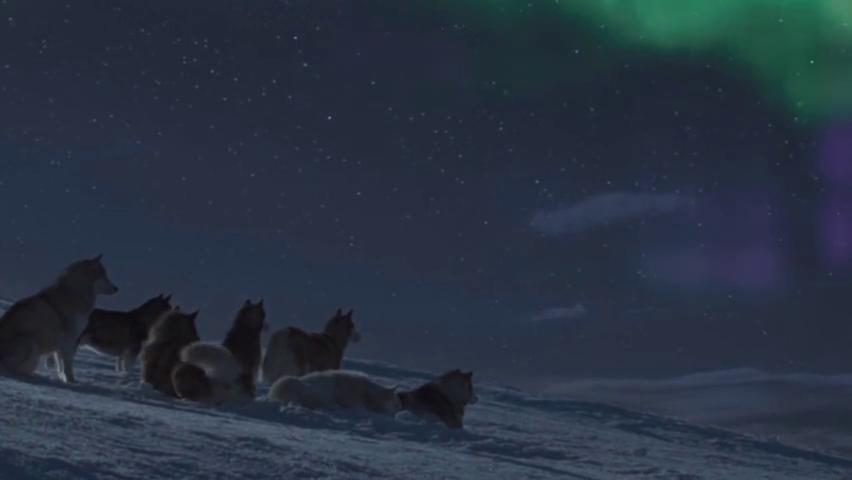 男子把爱犬丢弃,八只狗狗等主归来,在暴雪中生存175天!
