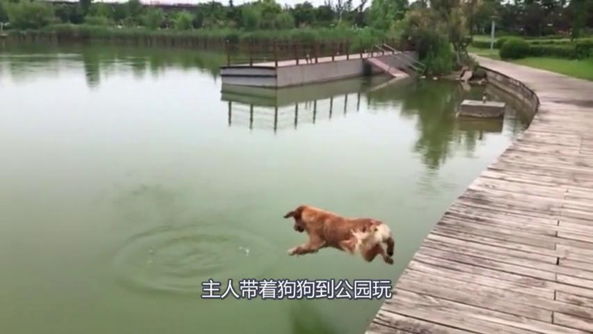 狗子被主人丢的石头坑下水手,刹加脚刹都刹不住,真是太可爱了!