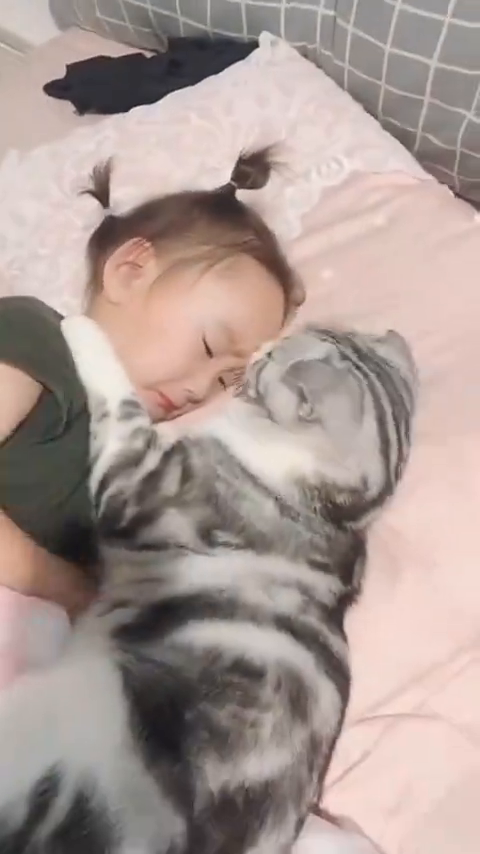猫咪与小孩和谐相处,这画面也太温馨了