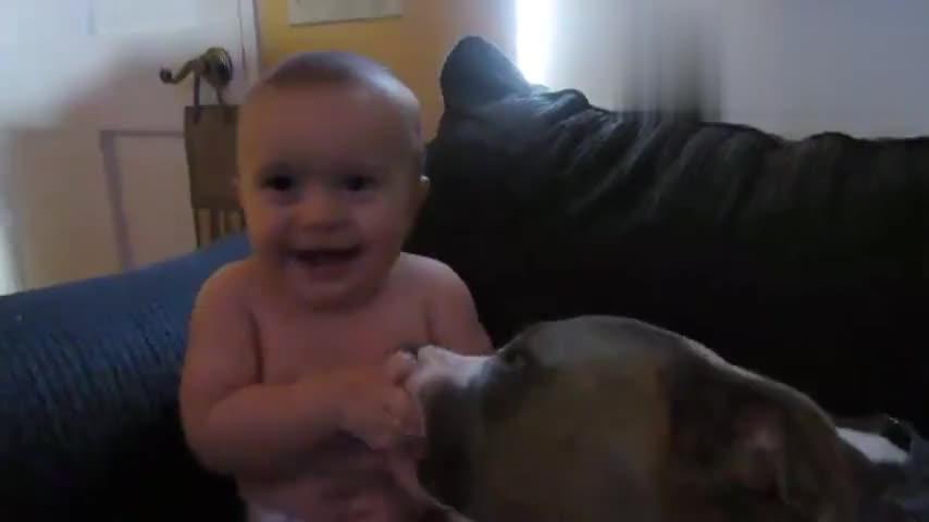 小宝宝穿尿不湿被狗狗狂舔小肉肉,痒得笑到不行,招架不住了