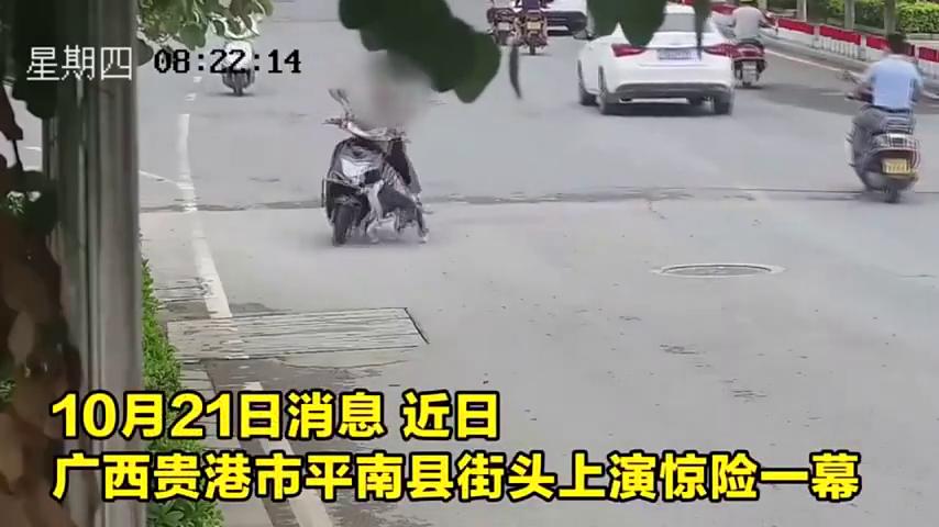 监控曝光!宠物狗横穿道路酿事故过路客连人带车摔倒街头