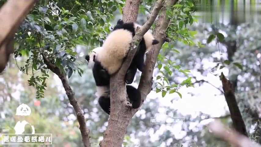 熊猫宝宝热干面蛋烘糕大宝座之争,这最后究竟算谁赢?