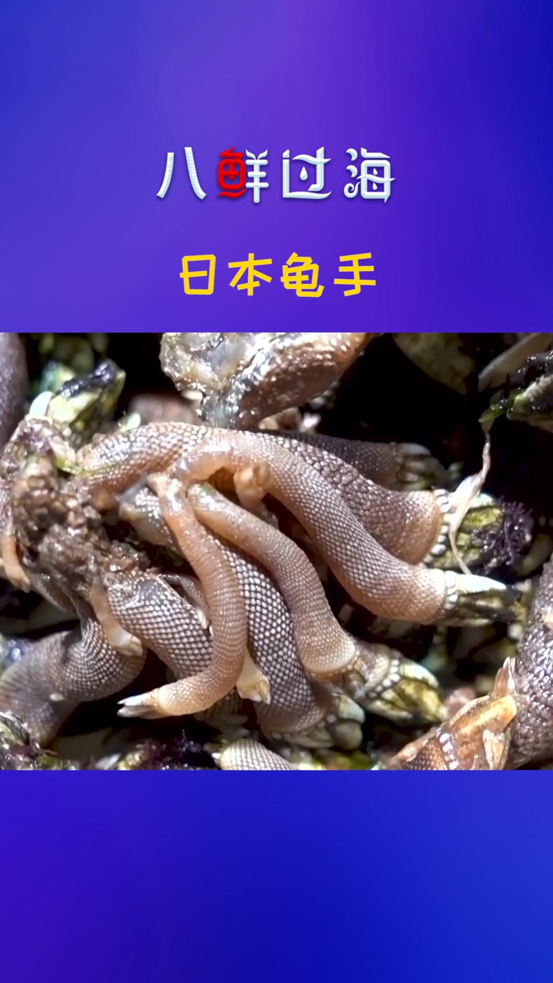 """""""来自地狱的海鲜"""":日本龟手"""