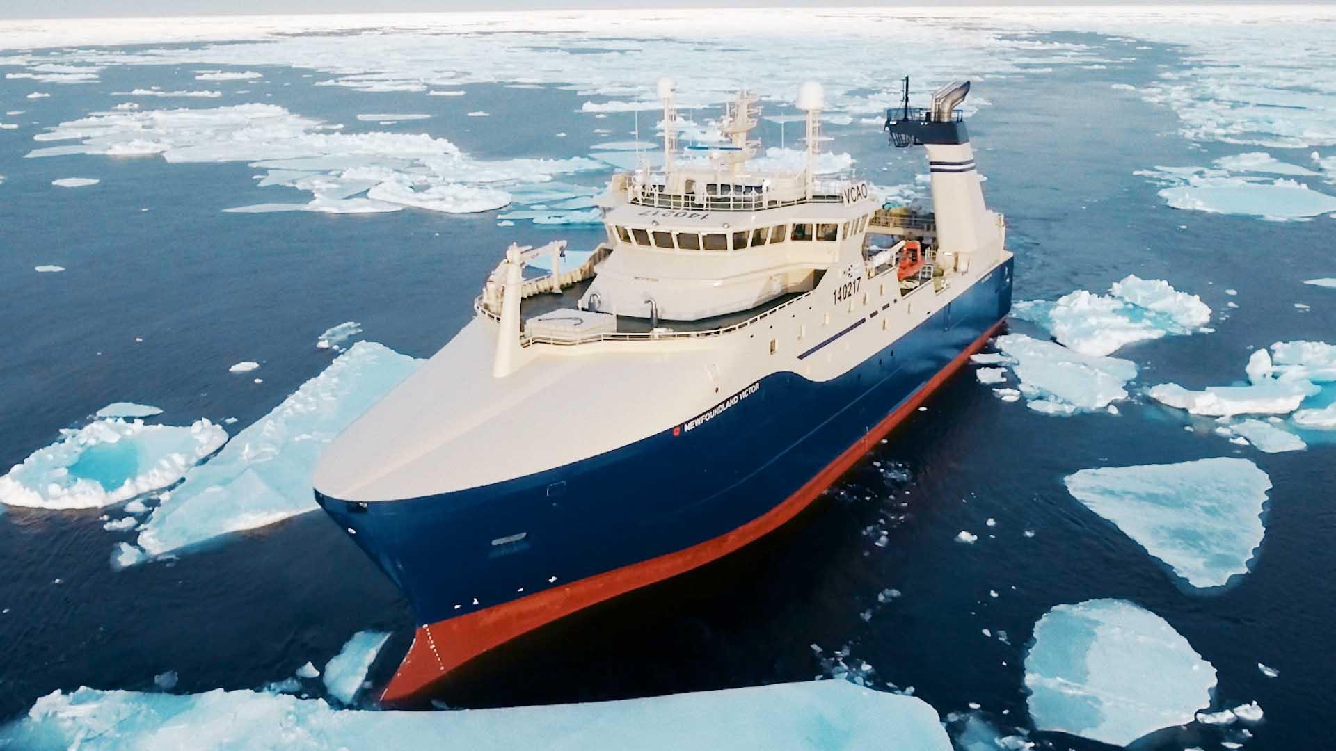 千吨级加拿大北极虾渔船,冬季破冰捕虾船上加工锁住虾肉新鲜!