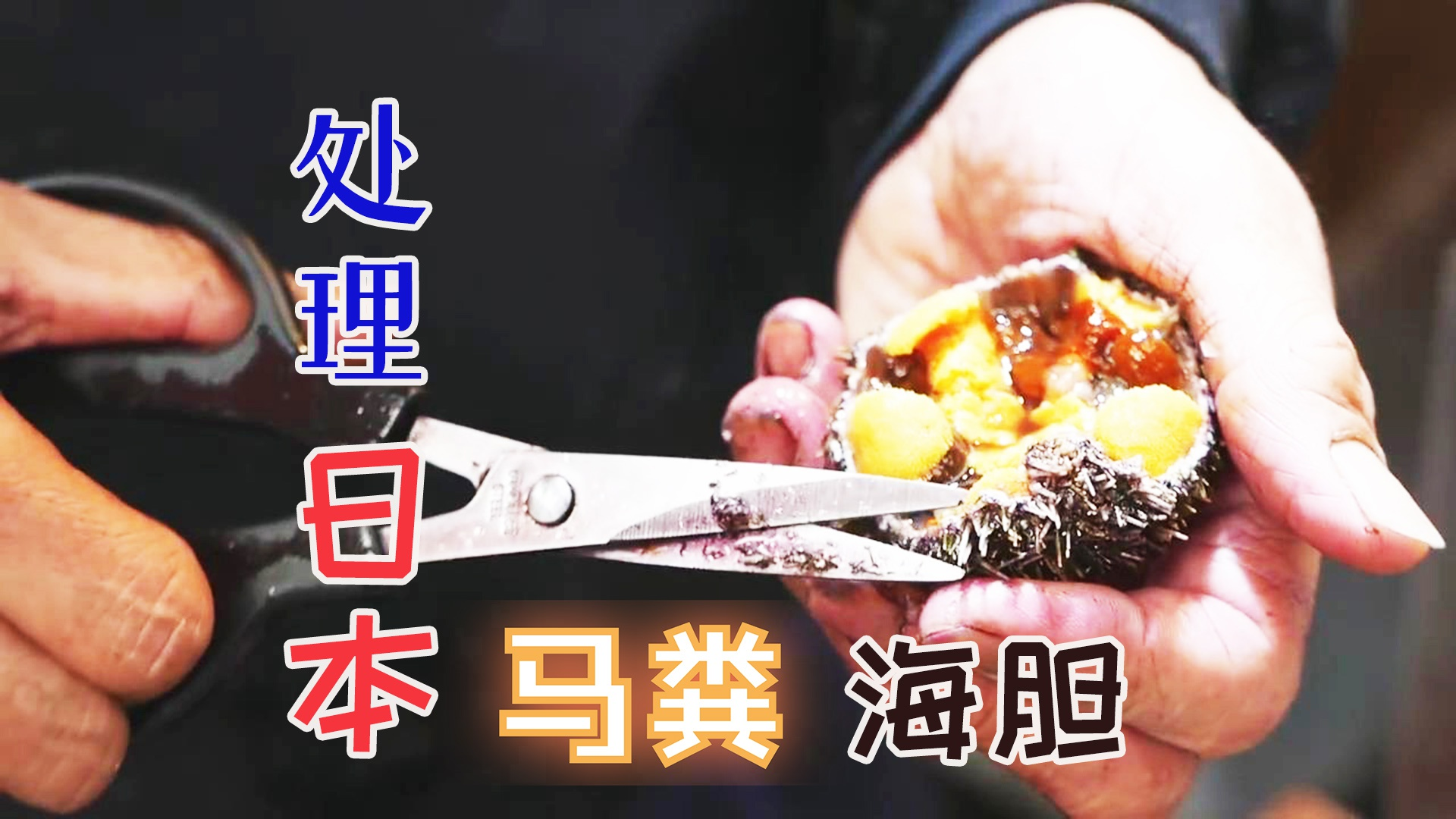日本厨师处理新鲜马粪海胆,剪刀破壳取胆肉颜色黄灿诱人!