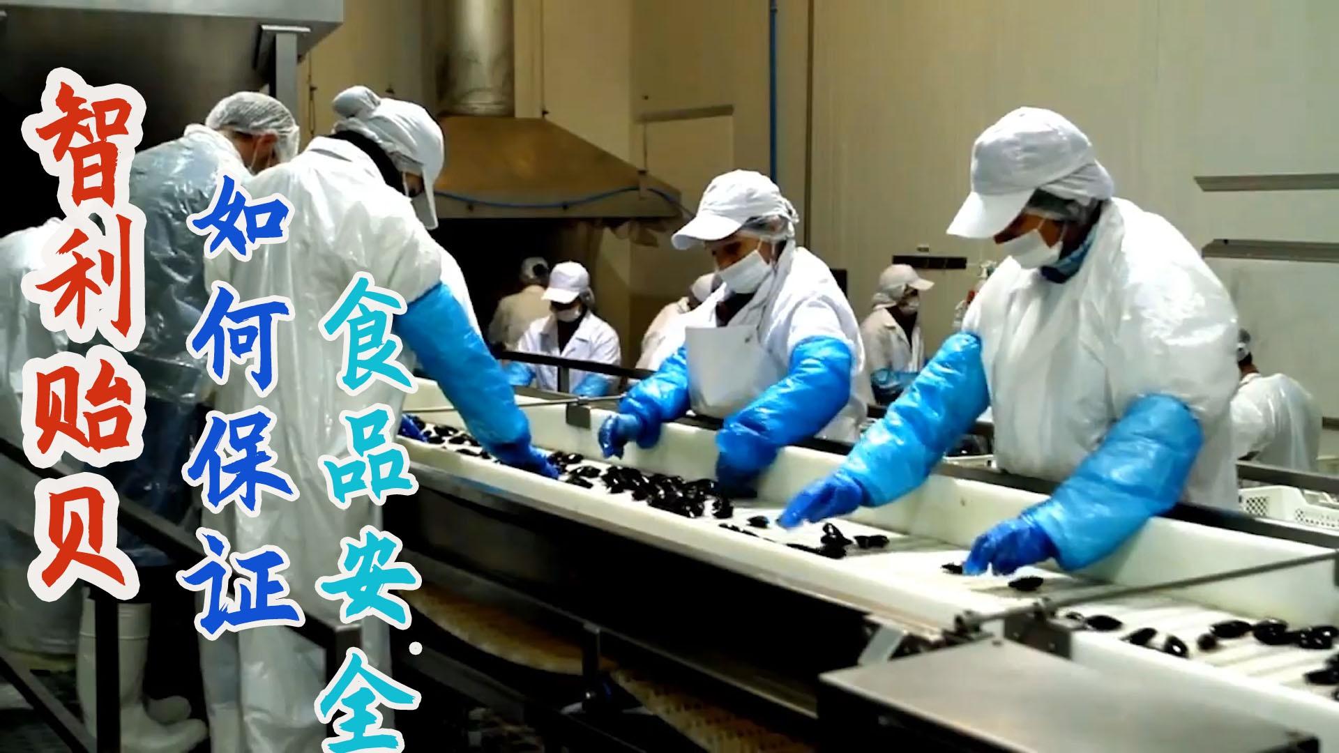 智利贻贝现代化加工厂,工人戴口罩穿防护服确保贝肉无污染!