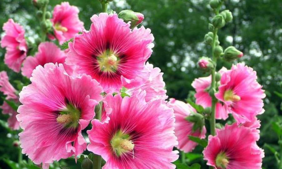 4种花是懒人的最爱,好养又漂亮,格调高雅、花期长