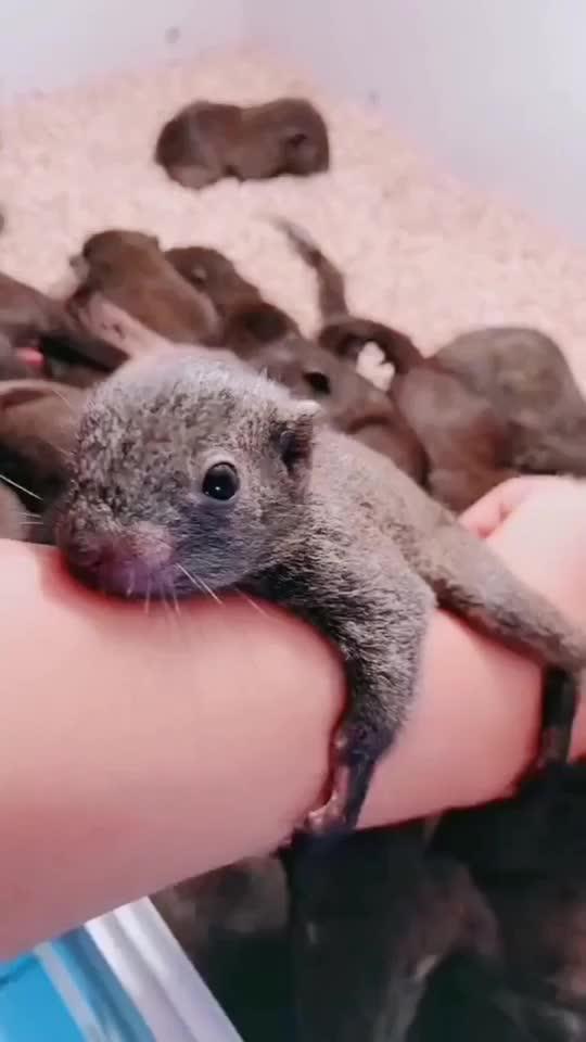 冬天到了松鼠抱团取暖这一群小可爱应该不会太冷了