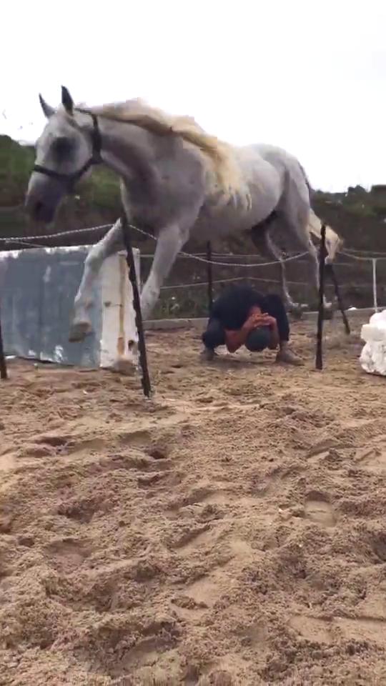 马匹跳过主人,配合默契