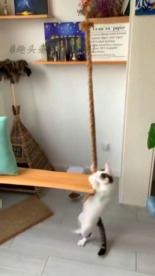 爬秋千的猫咪,这是什么情况,再跳钢管舞