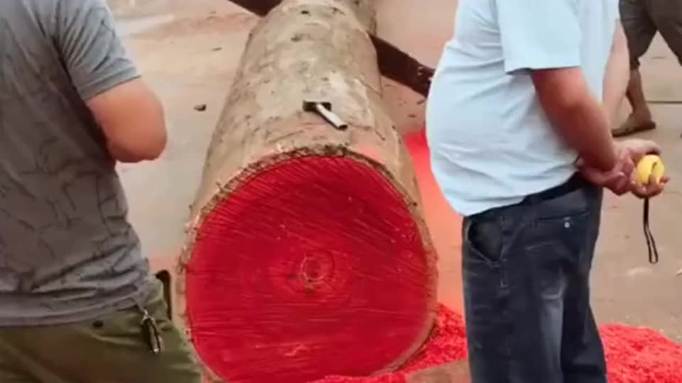 老板花了三十万买的这块木头,员工这一锯子下去,老板这下赚大了