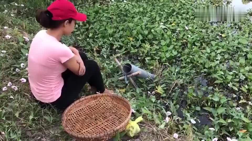 农村美女布置陷阱抓鱼,今天这收获爆棚,抓了几十斤大货