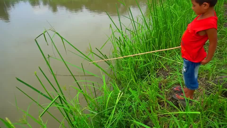 小男孩水塘边钓鱼,鱼儿接二连三的上钩,让男孩越钓越高兴