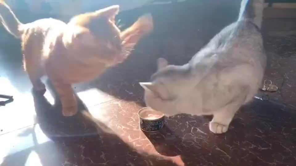 吃不到就打人家,果然是橘猫