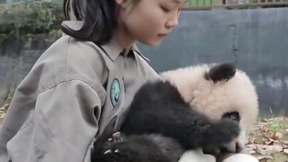 调皮的小熊猫:奶妈,我知道咬人不对,我错了,下次还敢