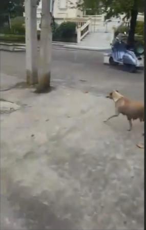 男子路边给流浪狗一根香肠,接下来狗狗的做法让人看完泪流满面