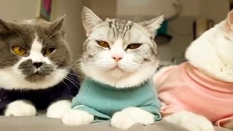 铲屎的智障多年,多亏三只小猫咪不离不弃