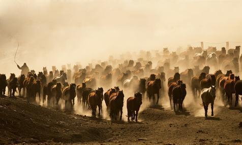 山丹军马场 蜚声中外的远东第一马场,闻名世界