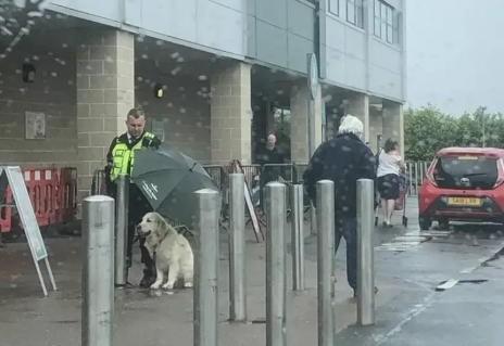 金毛犬在大雨下默默等待主人,善良保安大哥默默为它撑伞感动众人