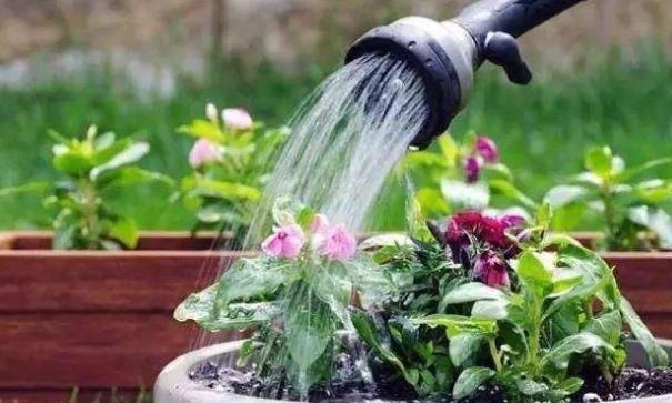 养花浇水有门道,好多人都做错了,掌握小技巧,花开拦都拦不住