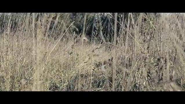 雾林寒战:男子在树林里走着,不料发现一个草堆,可以躲避