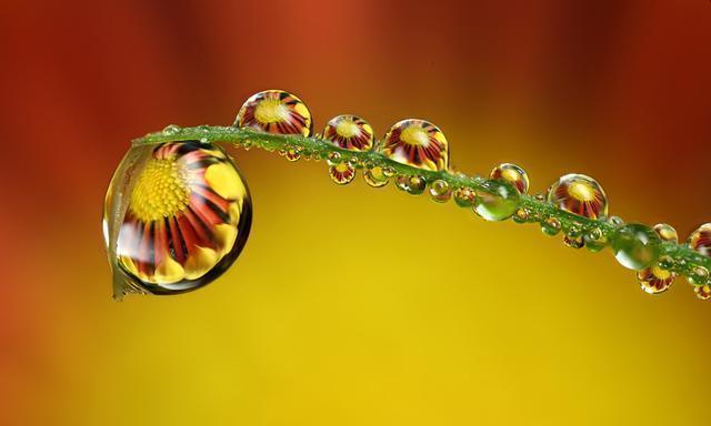 如何拍摄出惊艳的微距作品,使用这些技巧,让花朵在水滴里盛开