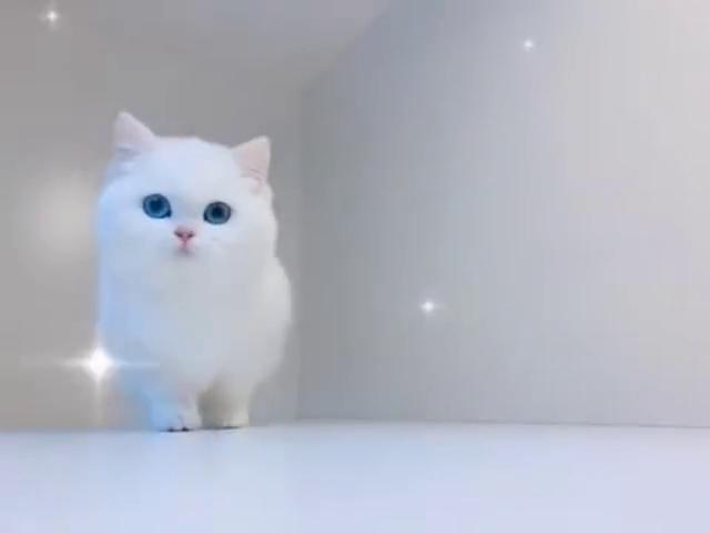 在韩国有一只流浪猫,大家喂它散装的猫粮它从来不吃