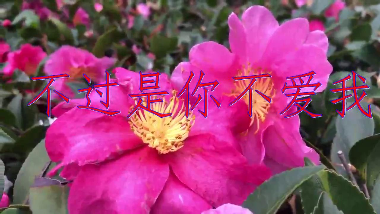 DJ何鹏、赵鑫《不过是你不爱我》,清脆嘹亮,声线柔美