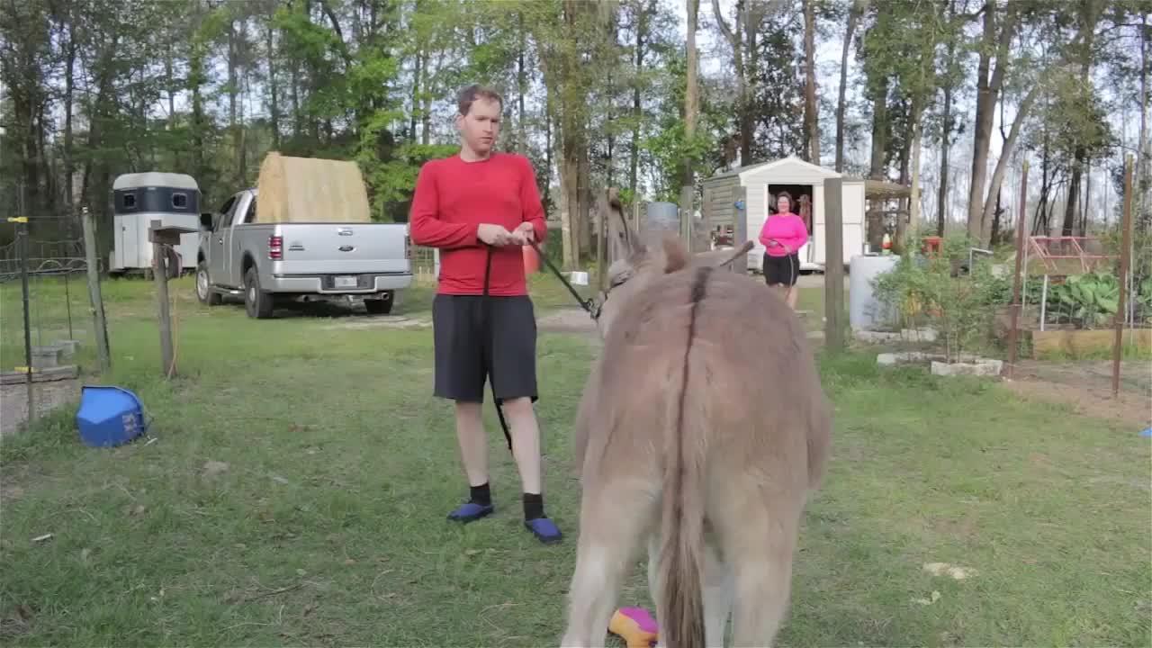 没见过这么倔的驴咋推都推不动驴别白费力气了