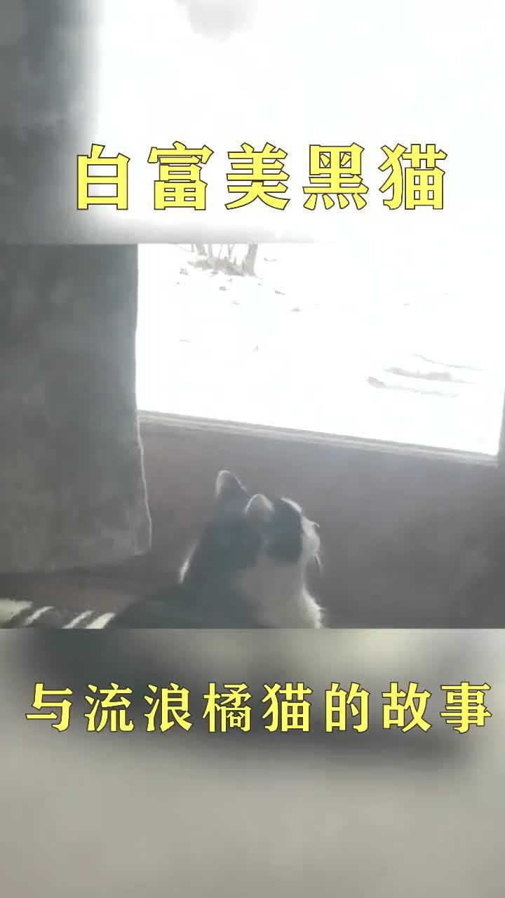 白富美黑猫与流浪橘猫的故事