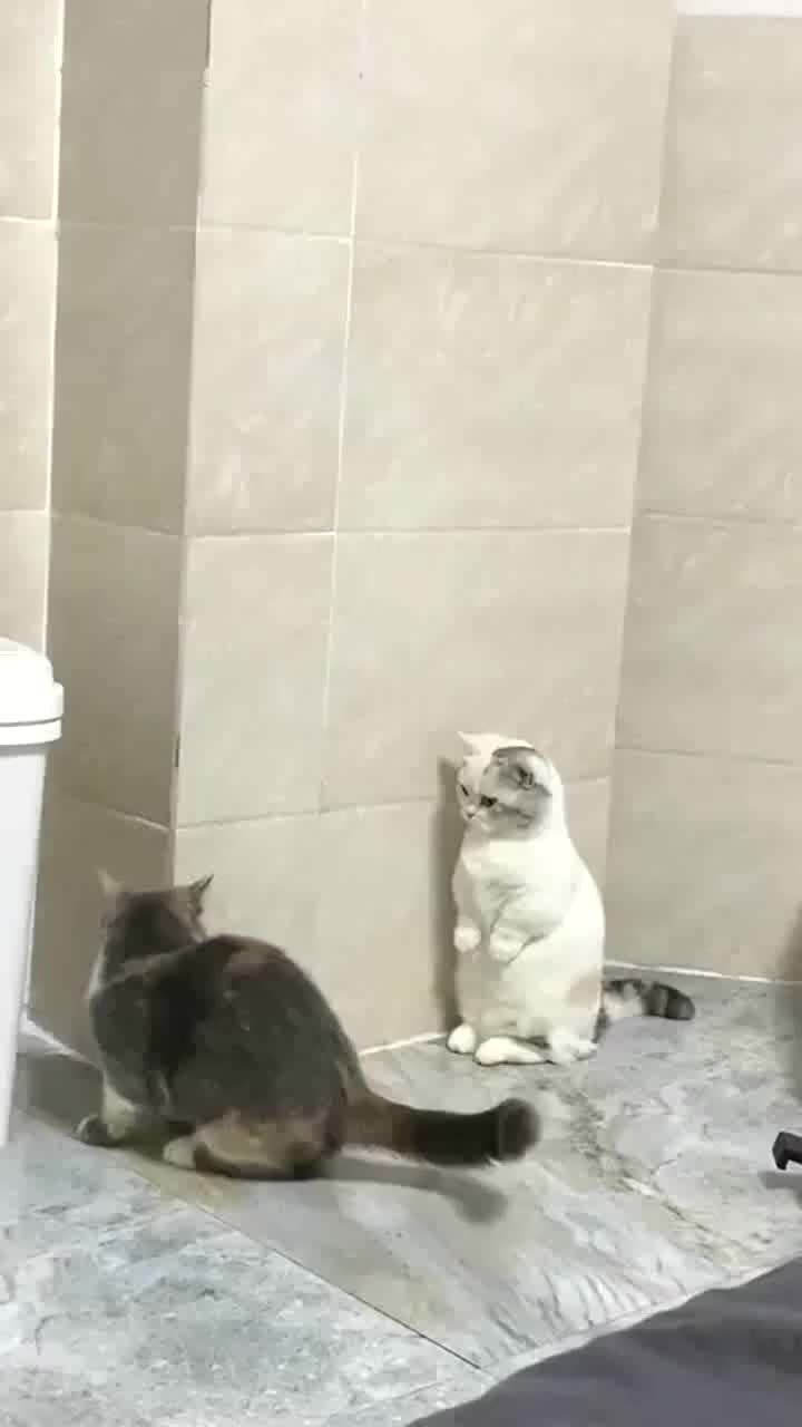 白猫挑衅黑猫,爪子真是不安分,怪不得经常挨打