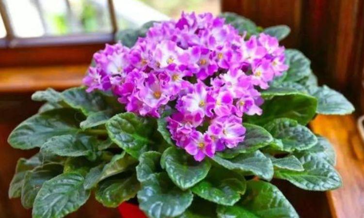 夏天养此款花卉,花期200多天,花儿轻松开爆盆,适合阳台盆栽