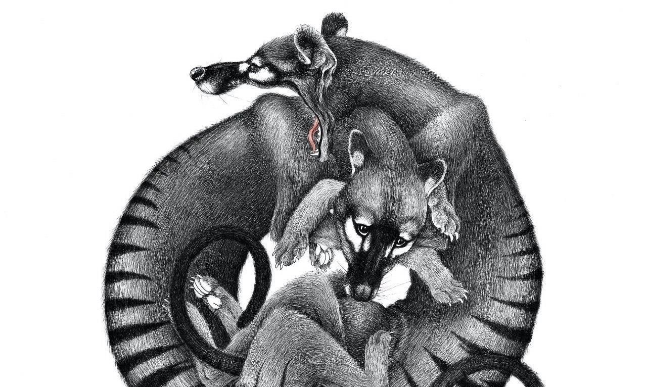 法裔新西兰插画师Cielle Graham作品欣赏