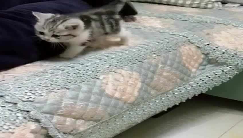 小猫咪冷了,有秘密保暖小窝