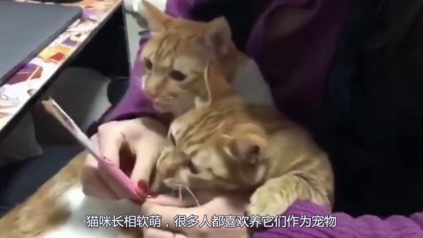 猫咪跟主人学打乒乓球,猫:你尽管发球,就没有本王接不住的