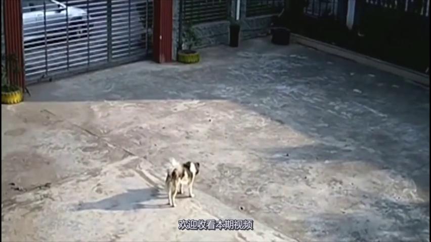 狗狗正在晒太阳,突然过来一个陌生人,监控拍下这疯狂画面!