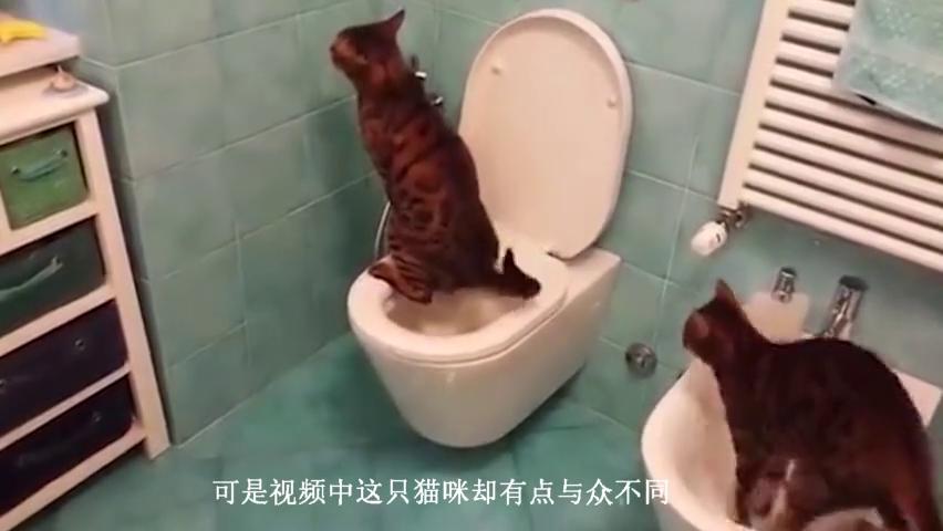 看完了喵星人上厕所,我开始怀疑人生!