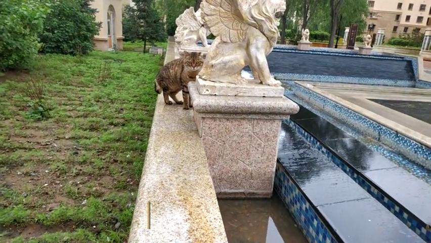 又见小区流浪猫,主动送猫粮,却被嫌弃