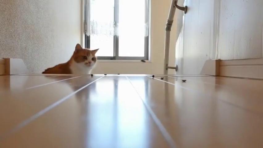 一群喵星人占领楼梯,想从此路过,留下猫粮