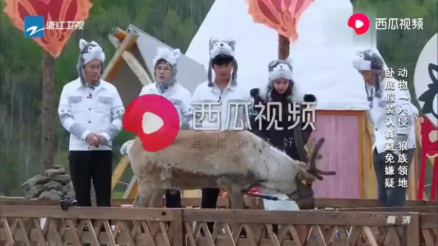 郑恺把小鹿唱到岔气baby玲花心疼小鹿担心询问它是不..