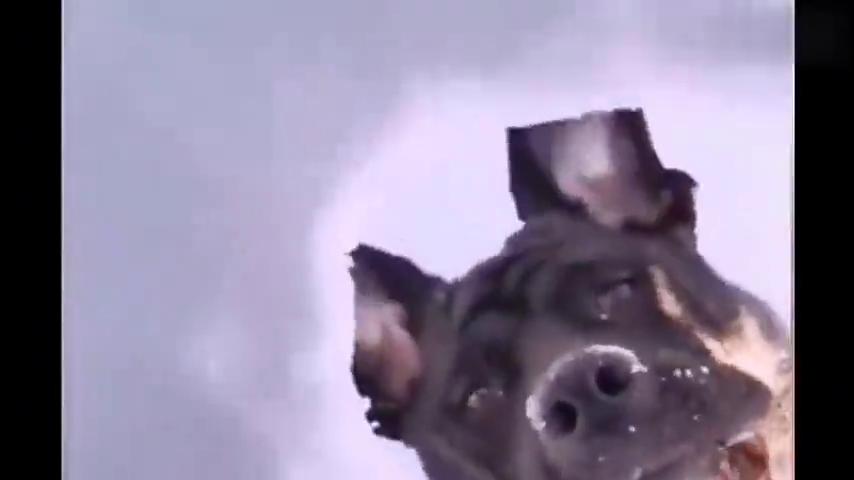 宠物搞笑视频:不是吧!?大灰熊居然会开摩托车?萌宠沙雕合集