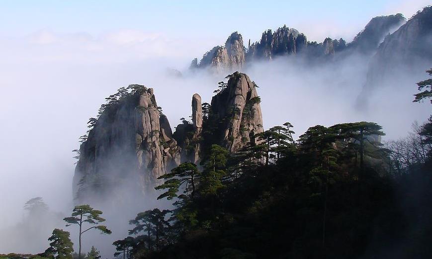 黄山的悬岩上有复活草,被沸水烫过三遍,还能复活?