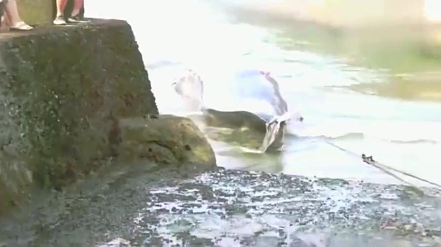 日本人海捕鲸鱼,做法残忍,令人心痛