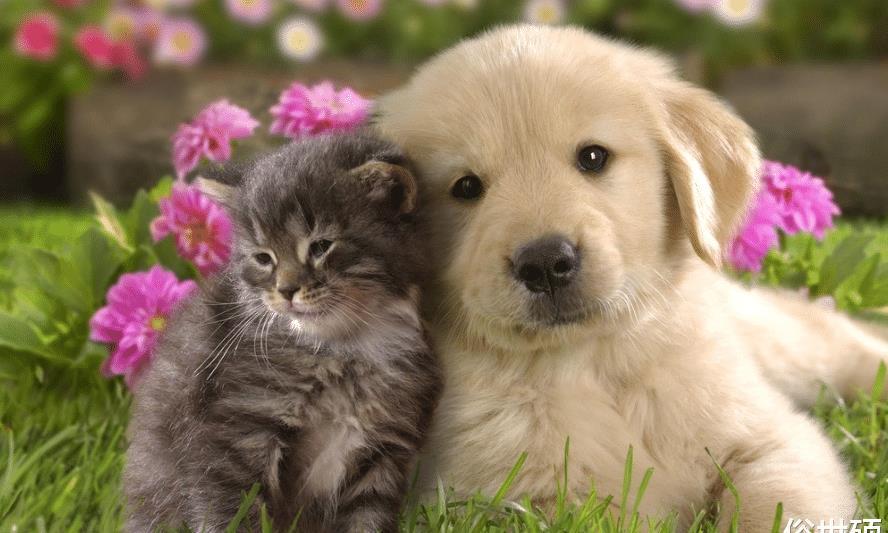 一个属于流浪狗的海岛,岛上生活着上千只狗,网友:狗狗的天堂!